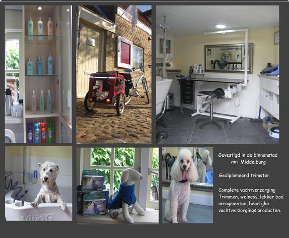 Homepage Renate's Doggy Care